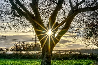 Brown tree on green grass field during sunset
