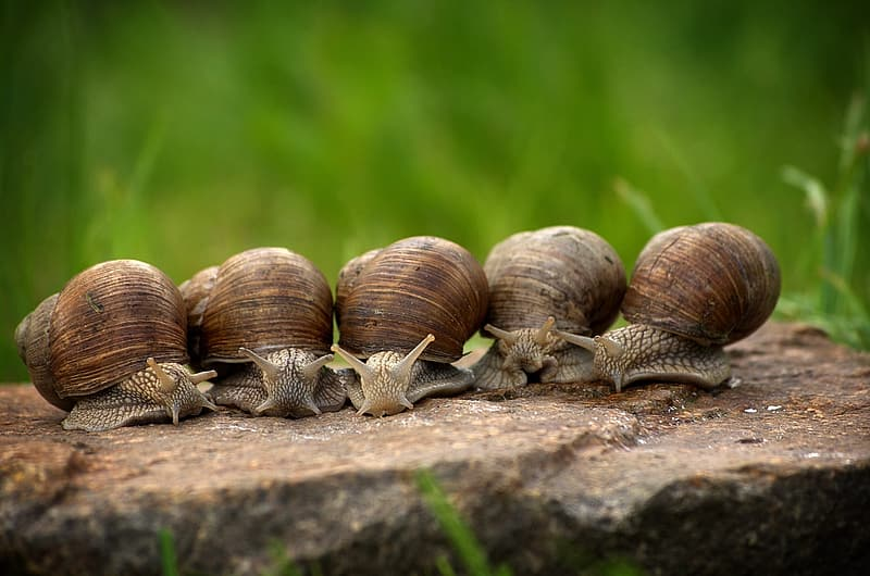 Five brown snails