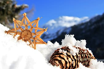 Shallow focus photography of pine cone on snow during daytime