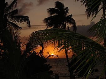 Silhouette of palm trees