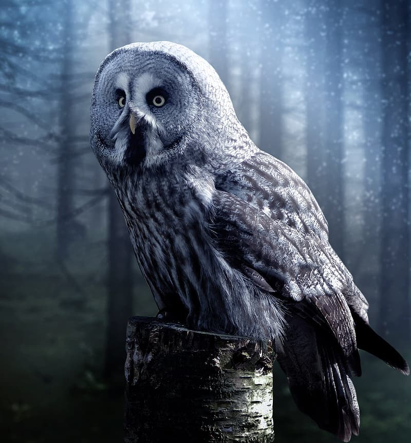 White and grey owl