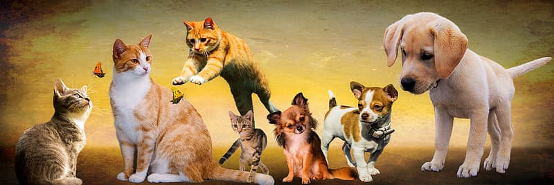 White and brown cats and dogs illustrations