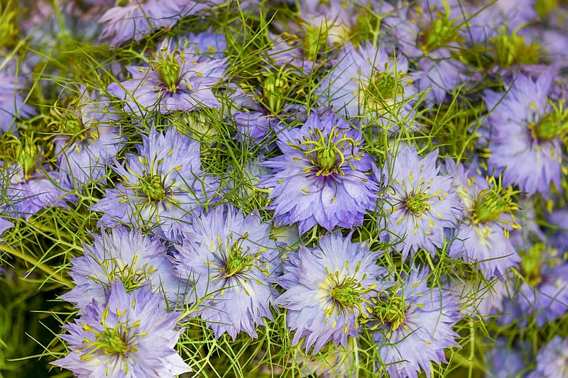 Purple petaled flowers in closeup photography