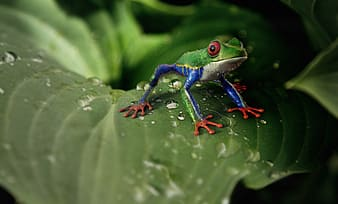 Macro shot photography of green frog on top of green leaf