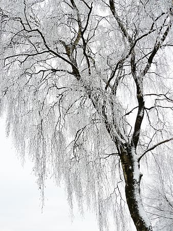Brown withered tree covered with snow