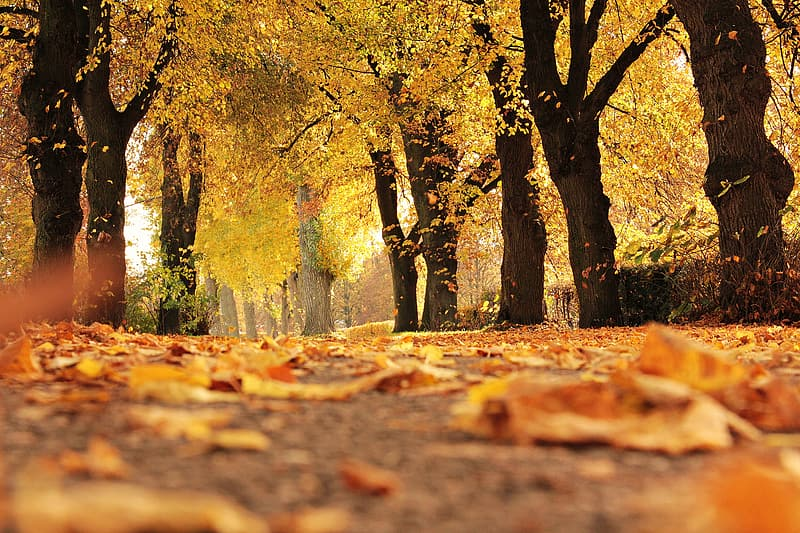 Withered leaves on grey concrete pathway surrounded by brown leaf trees at daytime
