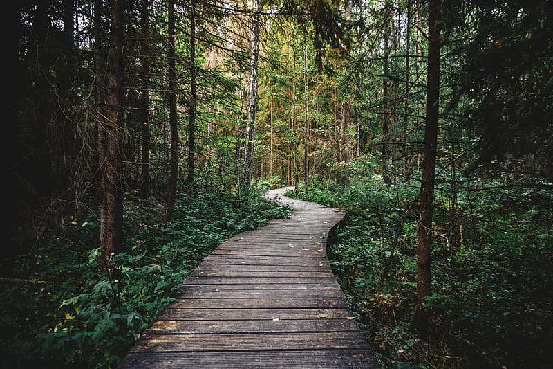 Brown wooden pathway in the middle of green trees