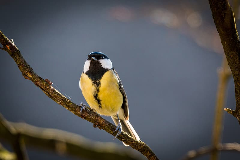 Yellow and black bird perched on tree
