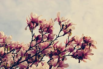 Pink and white flowers under white clouds during daytime