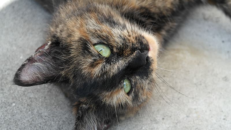 Brown and black cat lying on gray textile