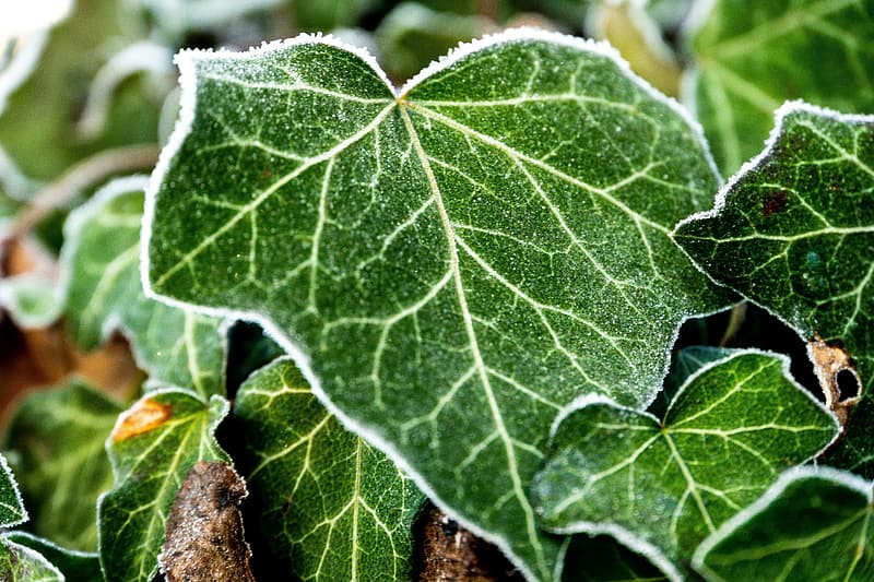 Green and brown leaf in close up photography