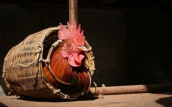 Red rooster on brown wooden barrel