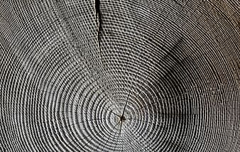 untitled, wood, annual rings, grain, structure, tree, texture, cracked, pattern, cracks
