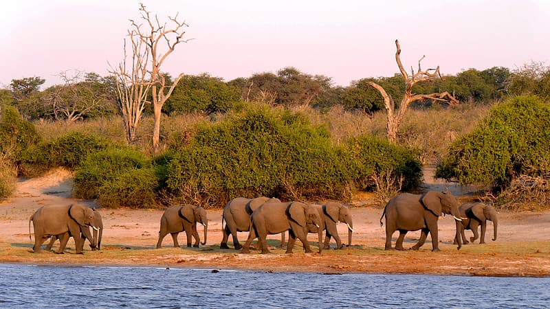 Group of elephants walking at the side