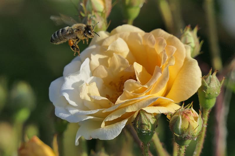 Selective focus photo of bee on top of flower