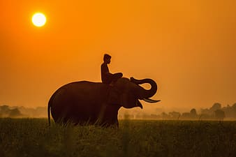 Man on top of elephant during daytime