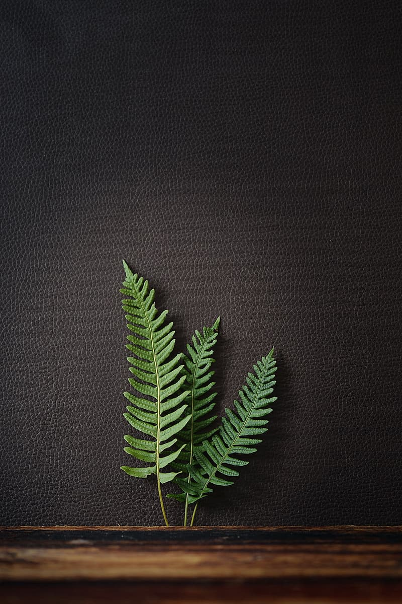 Three green fern leaf on black leather surface close-up photo