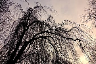 Sepia photography of worm's-eye view of tree