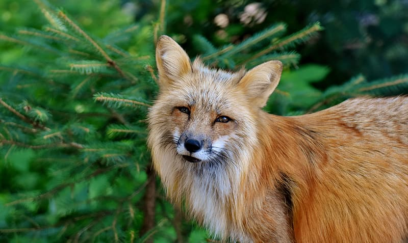 Brown fox on green plant