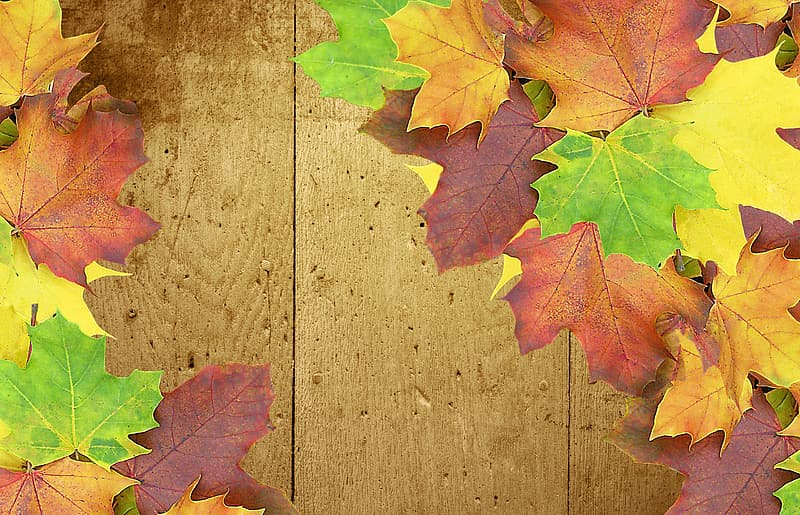 Maple leaves on brown parquet