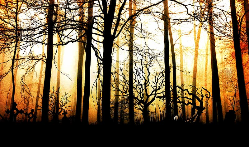 Silhouette of bare trees