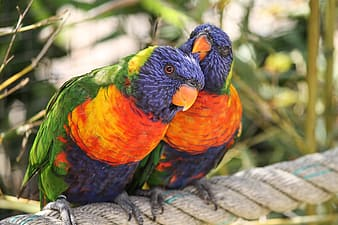 Orange green and blue bird