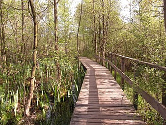 Brown wooden bridge surrounded by green trees