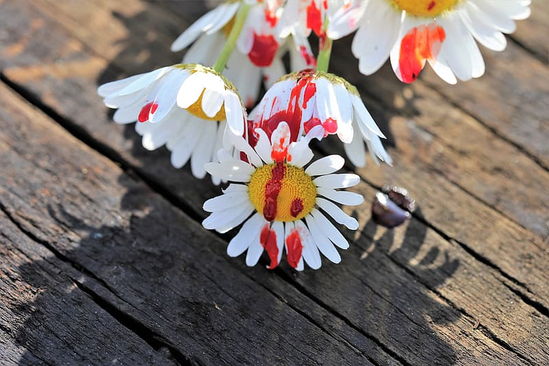 Daisy Flowers On Brown Wooden Table Pikrepo Perishable products (like food or flowers). daisy flowers on brown wooden table