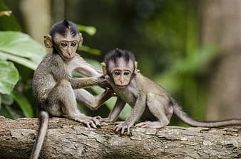Two monkeys on brown tree branch during daytime