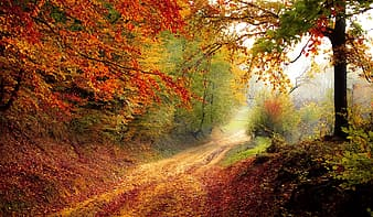 Dirt road between red and green trees at daytime