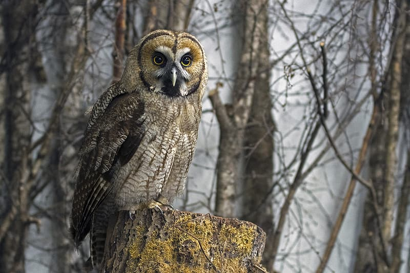 Owl perching on tree trunk