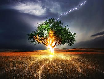 Green tree on brown grass field under gray clouds
