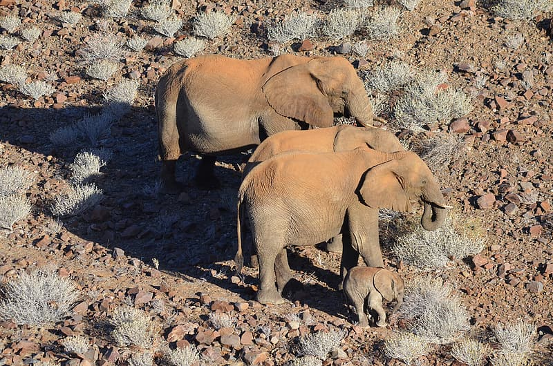 Group of elephants on brown soil