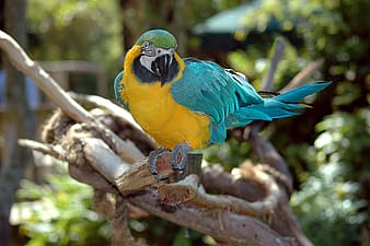Yellow and blue small beaked bird on tree