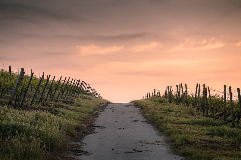 Landscape photography of scenery road