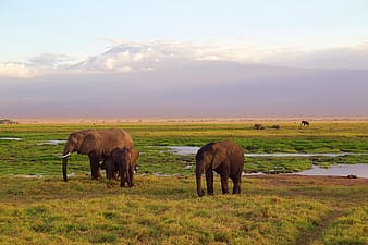 Two brown elephants on green grass field during daytime