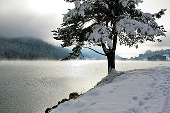 Tree with snowflakes near body of water