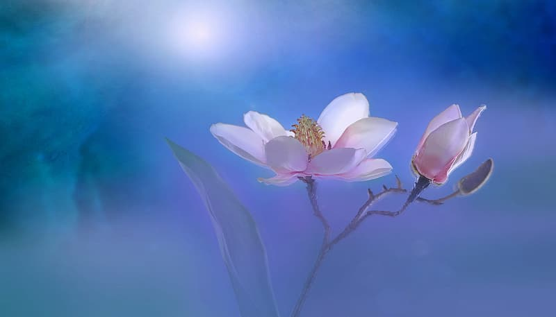 Selective focus photo of pink magnolia flower