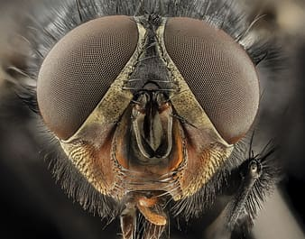 Micro photography of fly