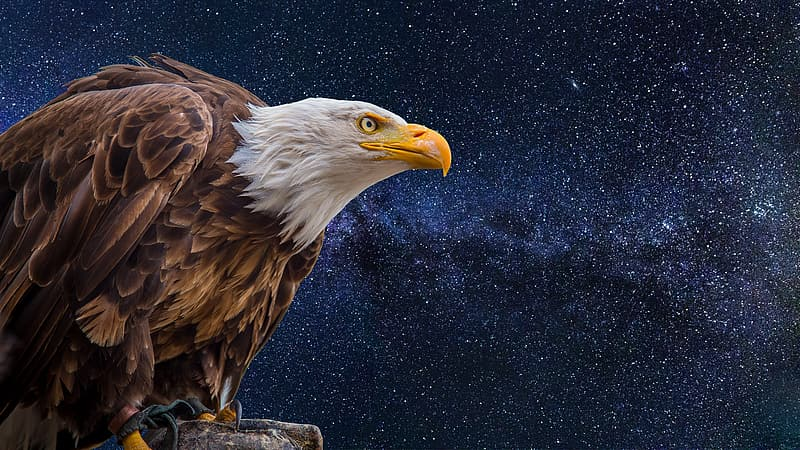 Eagle illustration with starry night sky background