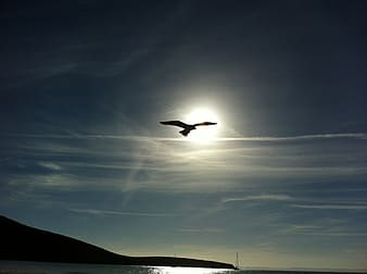 Silhouette of flying gull at daytime