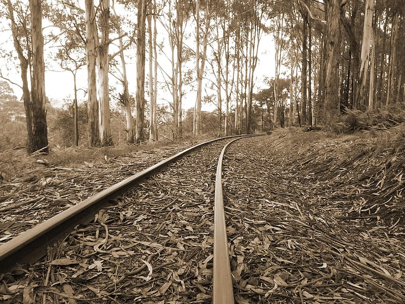 Deserted train tracks with dried leaves all around it
