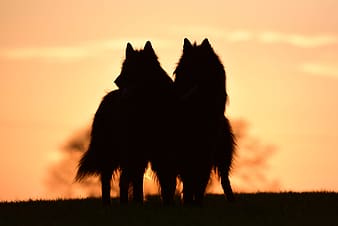 Silhouette of two animals