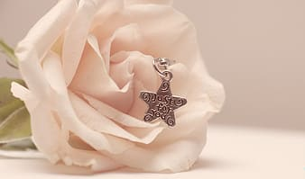 Silver-colored star pendant on white rose