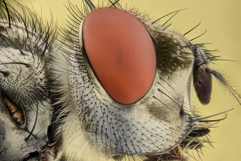 Close-up photography of fly