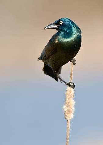 Selected focus photo of teal and brown bird on stick