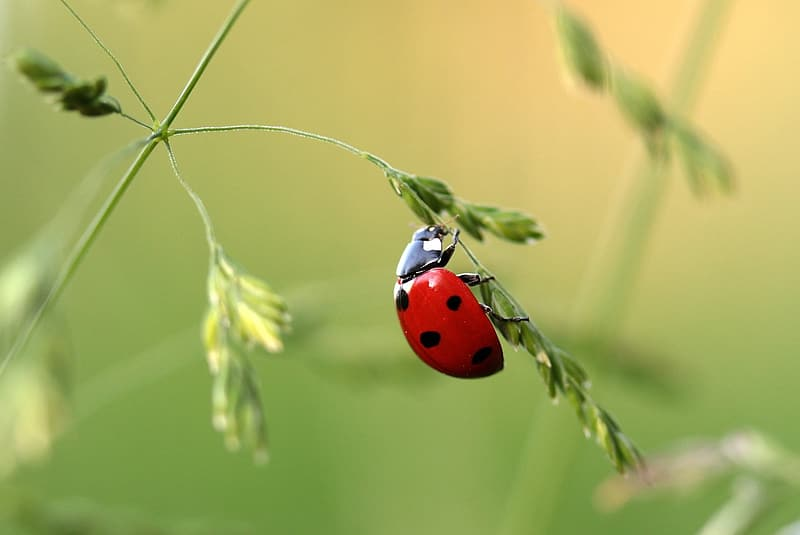 Red ladybug on green leaf plant in closeup photo