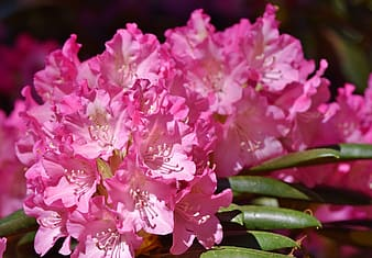 Pink flowers in shallow focus photography
