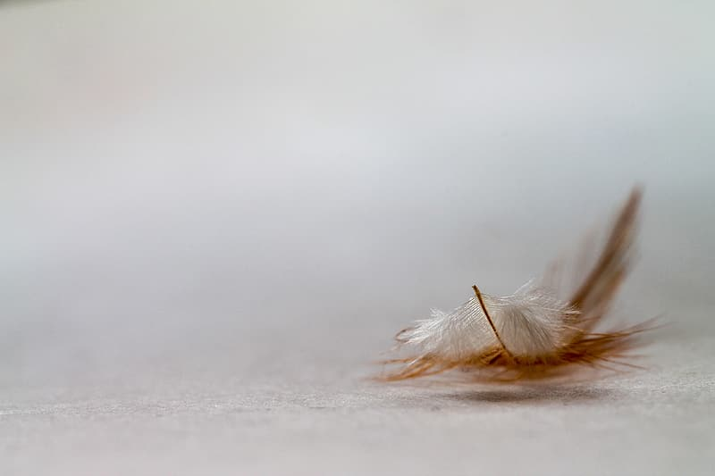 White and brown feather on white snow