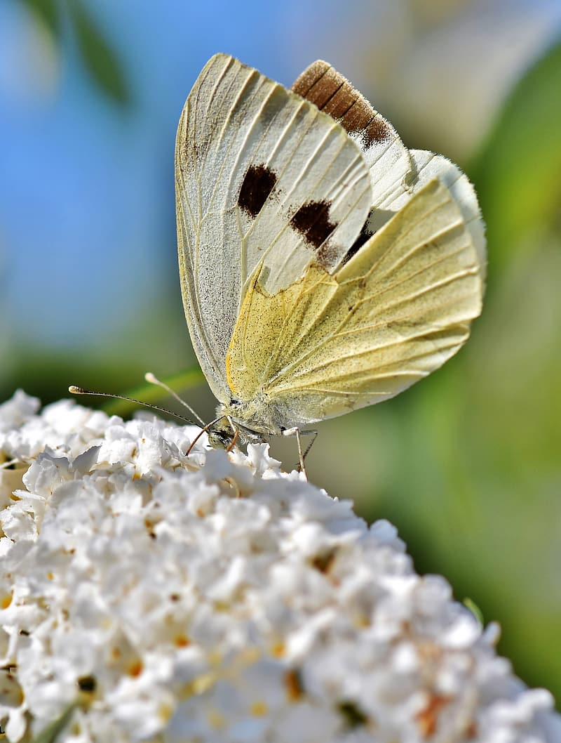 White and gray butterfly on white flower during daytime